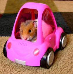 http://img2.generation-nt.com/car-crash-hamster-sportif-formule-1_00FA000000078175.jpg