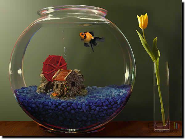 t aquarium design
